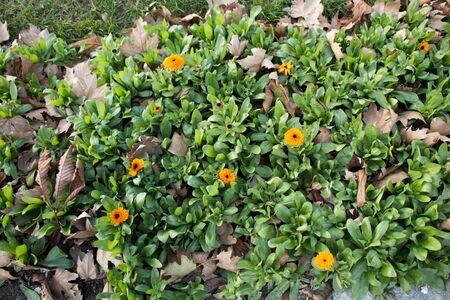 Beautiful fresh flowers as a nature background Banco de Imagens