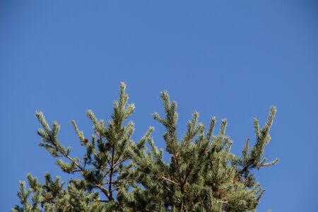 Top part of tree leaves with branches with sky view