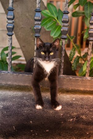 pictures of the Lovely cat as domestic animal in view Banco de Imagens