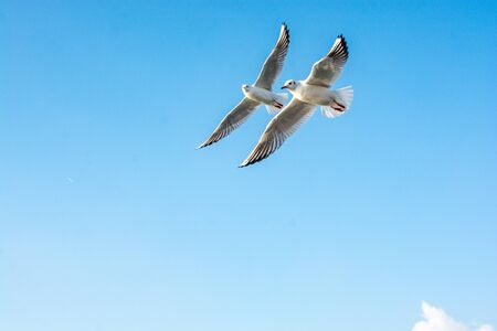 Seagull flying over the sea in Istanbul urban environment