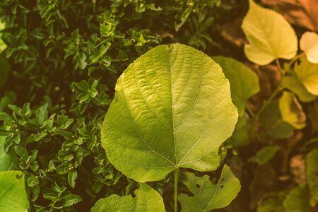 Leaves  as floral plant nature background  texture Reklamní fotografie