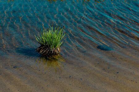 Wild grass by the pond on highland  in Artvin in Turkey