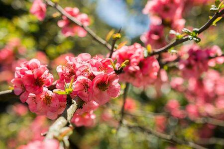Tree bloom blossom beautiful flowers in spring season Reklamní fotografie