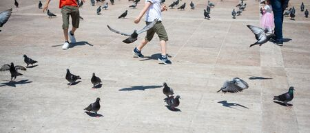 People amid Lovely pigeon birds feed in an urban environment