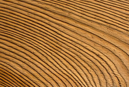 Timber background of wood texture.  Abstract wood background