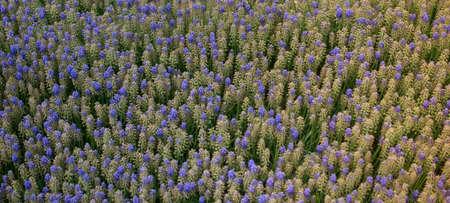 Blooming beautiful colorful natural flowers in view Standard-Bild