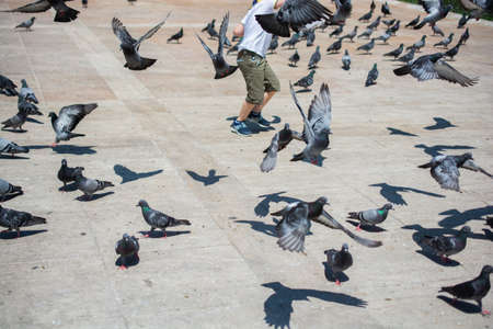 Little kid amid Lovely pigeon birds feed in an urban environment 版權商用圖片