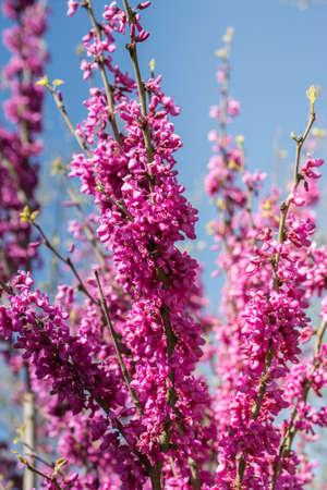 Tree bloom blossom beautiful flowers in spring season Archivio Fotografico