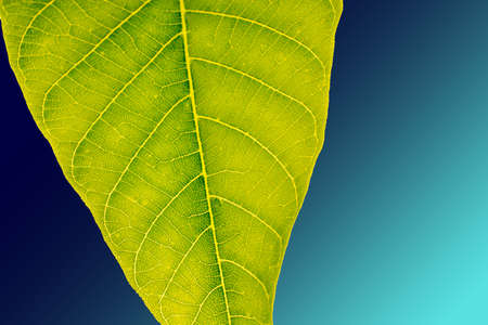 Hand holding a green leaf on a white background Zdjęcie Seryjne