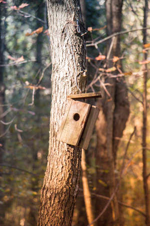 Wooden homemade birdhouse hanging on a  tree branch