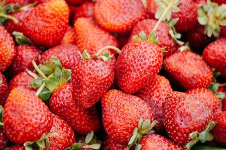 Freshly picked strawberries. Strawberry. Food background.