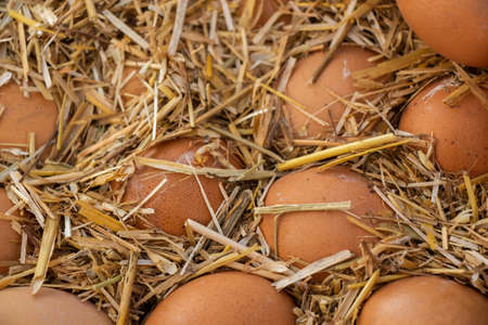 Organic fresh farm eggs at the market place