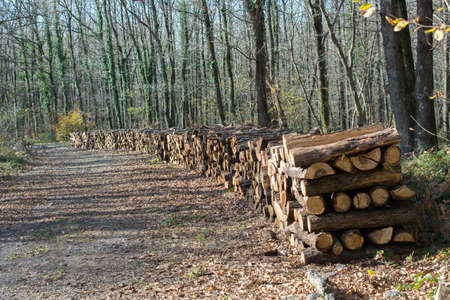 Stack of tree trunks piled up wood logs in forest