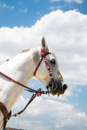 head of a horse outdoors with partial harness in view