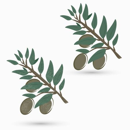 Olive branch Stock Vector - 17945577