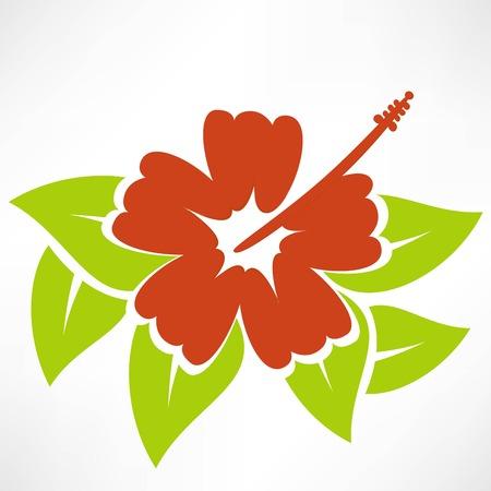 beautiful red hibiscus flower: Flor del hibisco