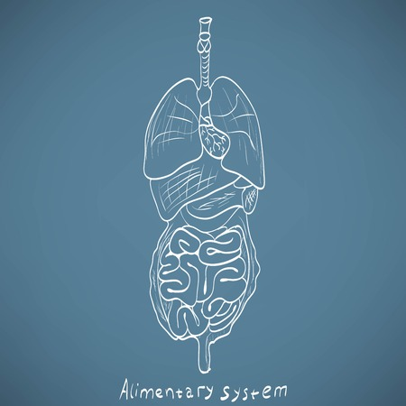 alimentary: chalk painted alimentary system