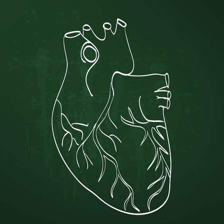 right atrium: heart anatomy on the chalkboard chalk painted Illustration