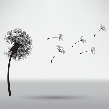 dandelion abstract: blowing dandelion