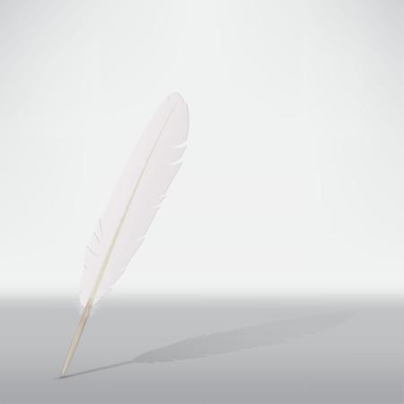 on white: white feather