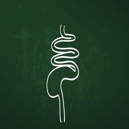 duodenum: digestive system chalk painted vector illustration Illustration