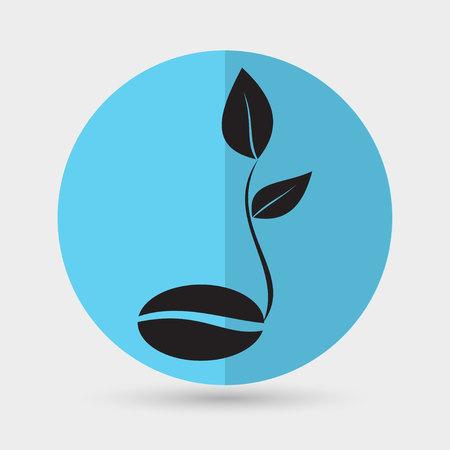 seedlings: coffee seedlings