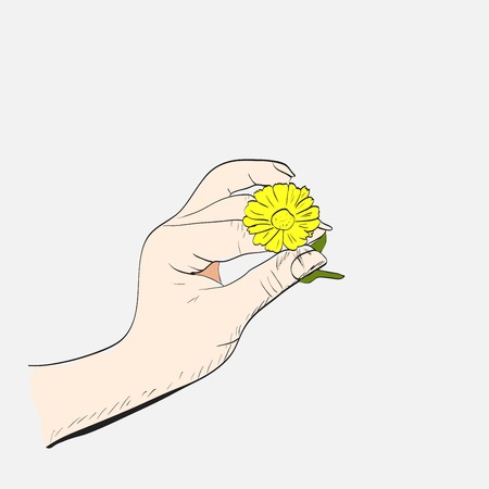 hand holding flower: Female hand with camomile