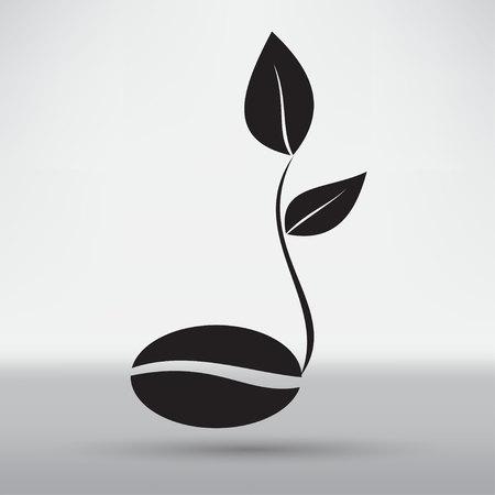 green bean: coffee seedlings
