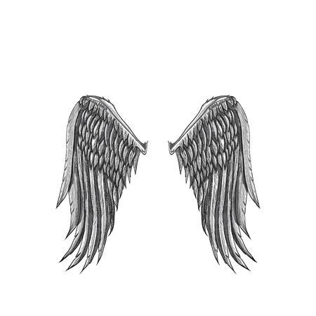 birds wings: angel wings illustration