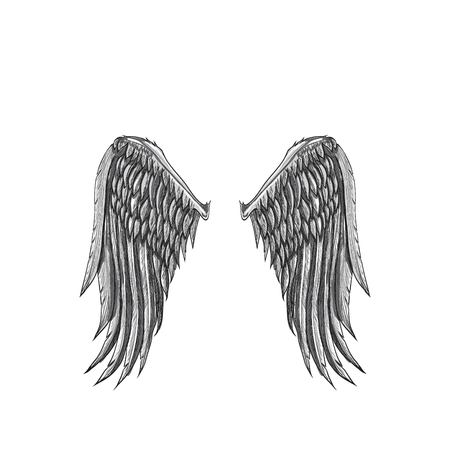 angel wings illustration