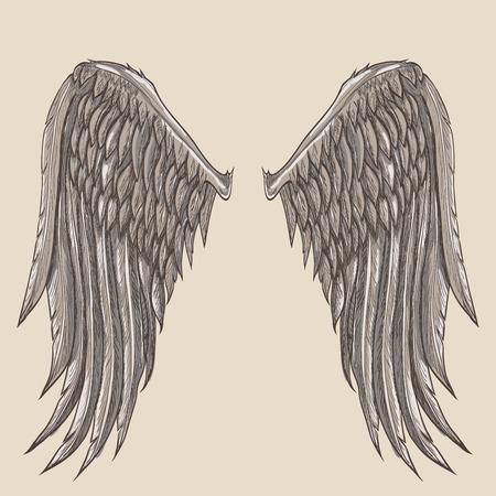 ali angelo: ali d'angelo illustrazione Vettoriali