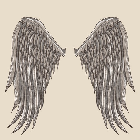 fairy wings: angel wings illustration