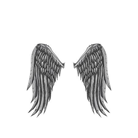 Vectorschets van grote witte vleugel twee