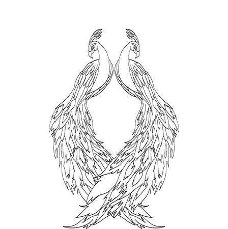 sketch: peacock sketch