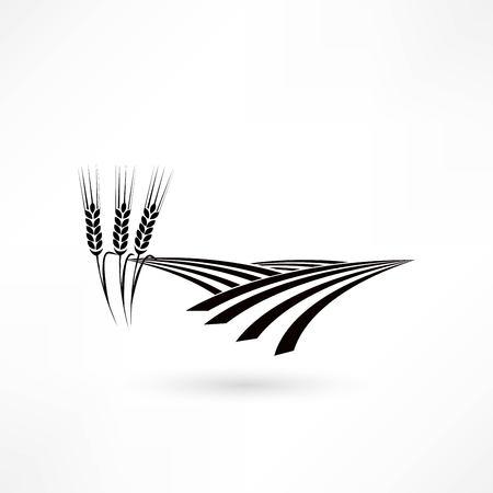 grain: grain field icon Illustration