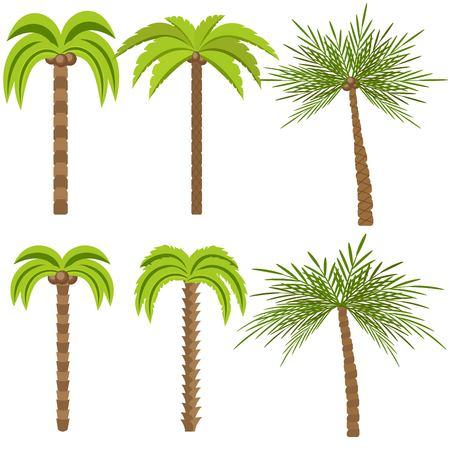 Palm trees isolated on white background. Beautiful vectro palma tree set vector illustration