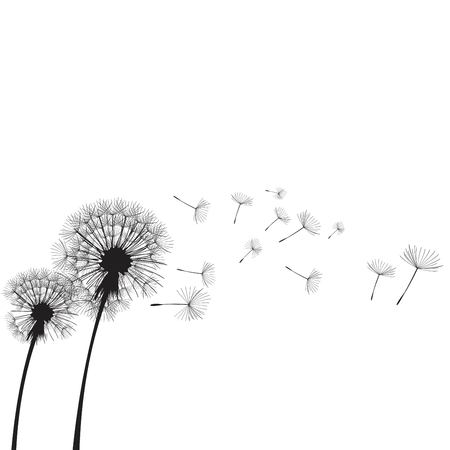 Vector illustration dandelion time. Two dandelions blowing in the wind. The wind inflates a dandelion