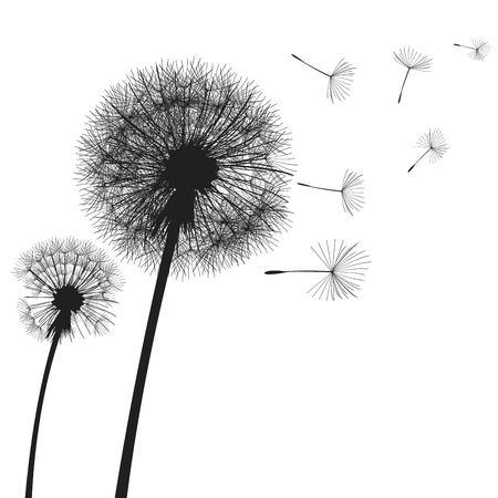 Temps de pissenlit illustration vectorielle. Deux pissenlits dans le vent. Le vent gonfle un pissenlit Vecteurs