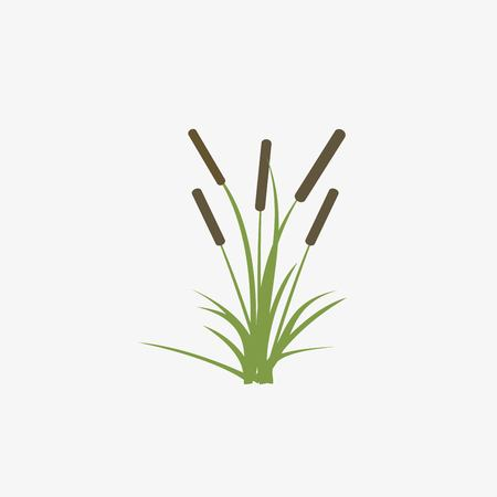Reeds and cattail plant isolated on white background