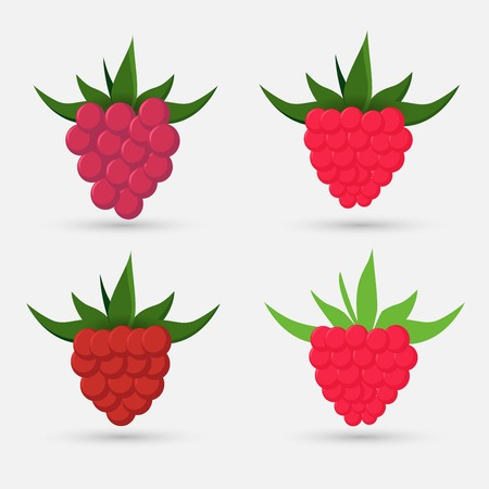 Collection of ripe raspberries illustration.
