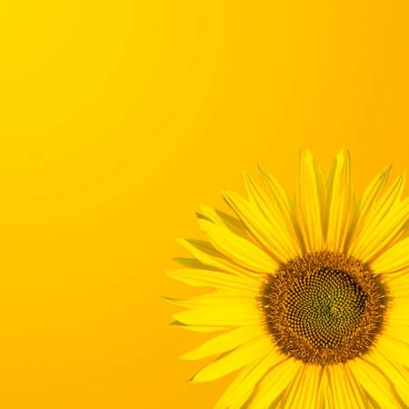 štěstí: slunečnice