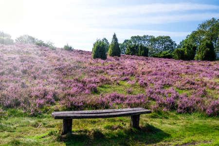 bench in Lueneburg Heath