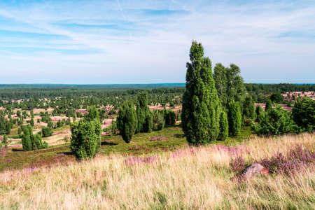 panoramic view on Lueneburg Heath Stock Photo