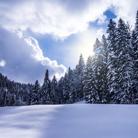 landscape with fir forest an hill in winter time Stock Photo