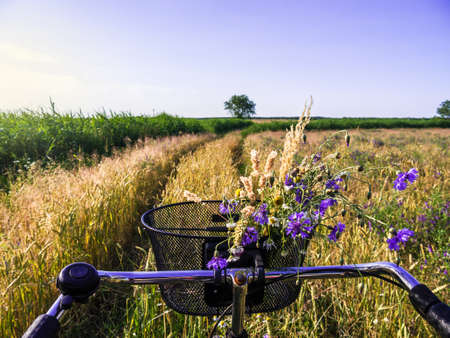 cycling near a cornfield in landscape in summer time photo