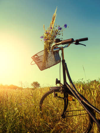 bicycle near a cornfield in summer time in sunset photo