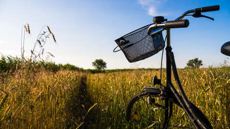 bicycle in cornfield in evening time in summer photo