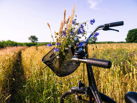 cornfield and a bicycle with bouquet and blue sky in summer photo