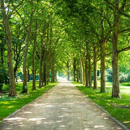 alley in tiergarten berlin in summer time