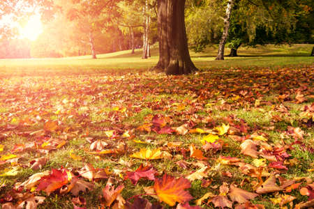autumn colour: meadow, maple and sunlight in autumn Stock Photo